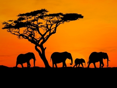 safari-photo-afrique