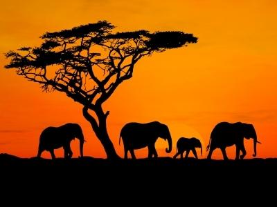 safari-photo-afrique