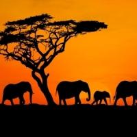 Partir en Safari avec la nouvelle collection Esprit Enfants
