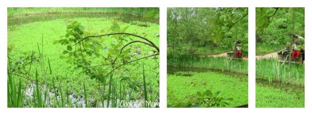 jardinchaumont3